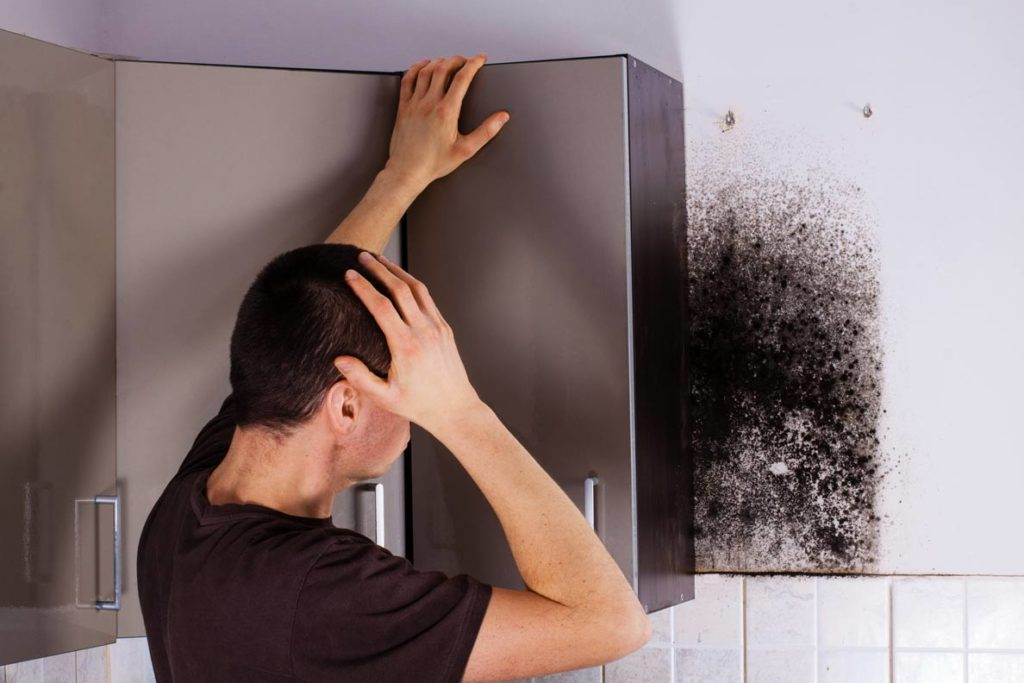 Mold Inspection Services-Lake Worth Mold Remediation & Water Damage Restoration Services-We offer home restoration services, water damage restoration, mold removal & remediation, water removal, fire and smoke damage services, fire damage restoration, mold remediation inspection, and more.